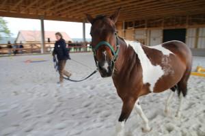 neugieriges Pferd - Angie