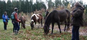 Pferde bei Wanderung