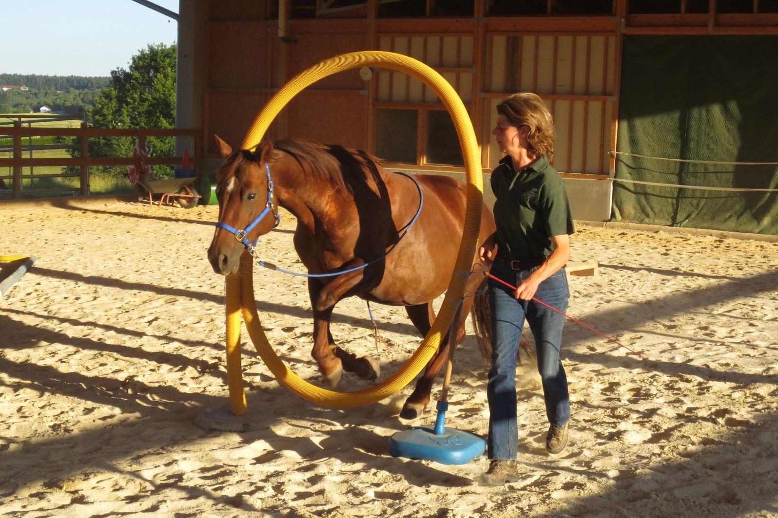 HorseTTagility