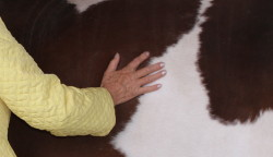 Lindas Hand TTouch