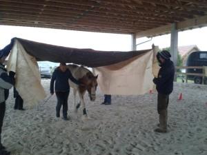 Pferd im Sacktunnel