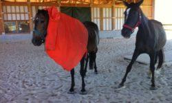 Pferde und Regenumhang